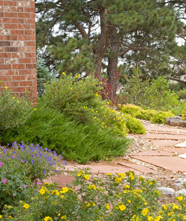 What Is 'Xeriscape' And Why Is It Important